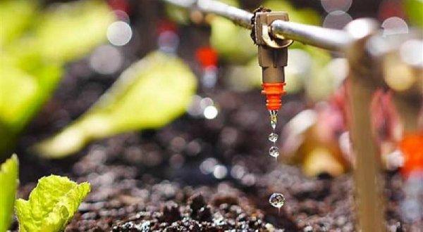 Hệ thống tưới nhỏ giọt cấp nước đủ đều lại không tốn công