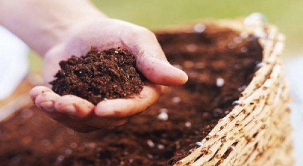 Phân bón hữu cơ - dinh dưỡng tốt nhất cho cây trồng, môi trường và sức khỏe con người