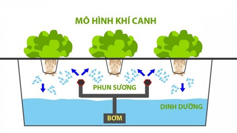 Trồng rau khí canh - mô hình rau sạch cho không gian hẹp